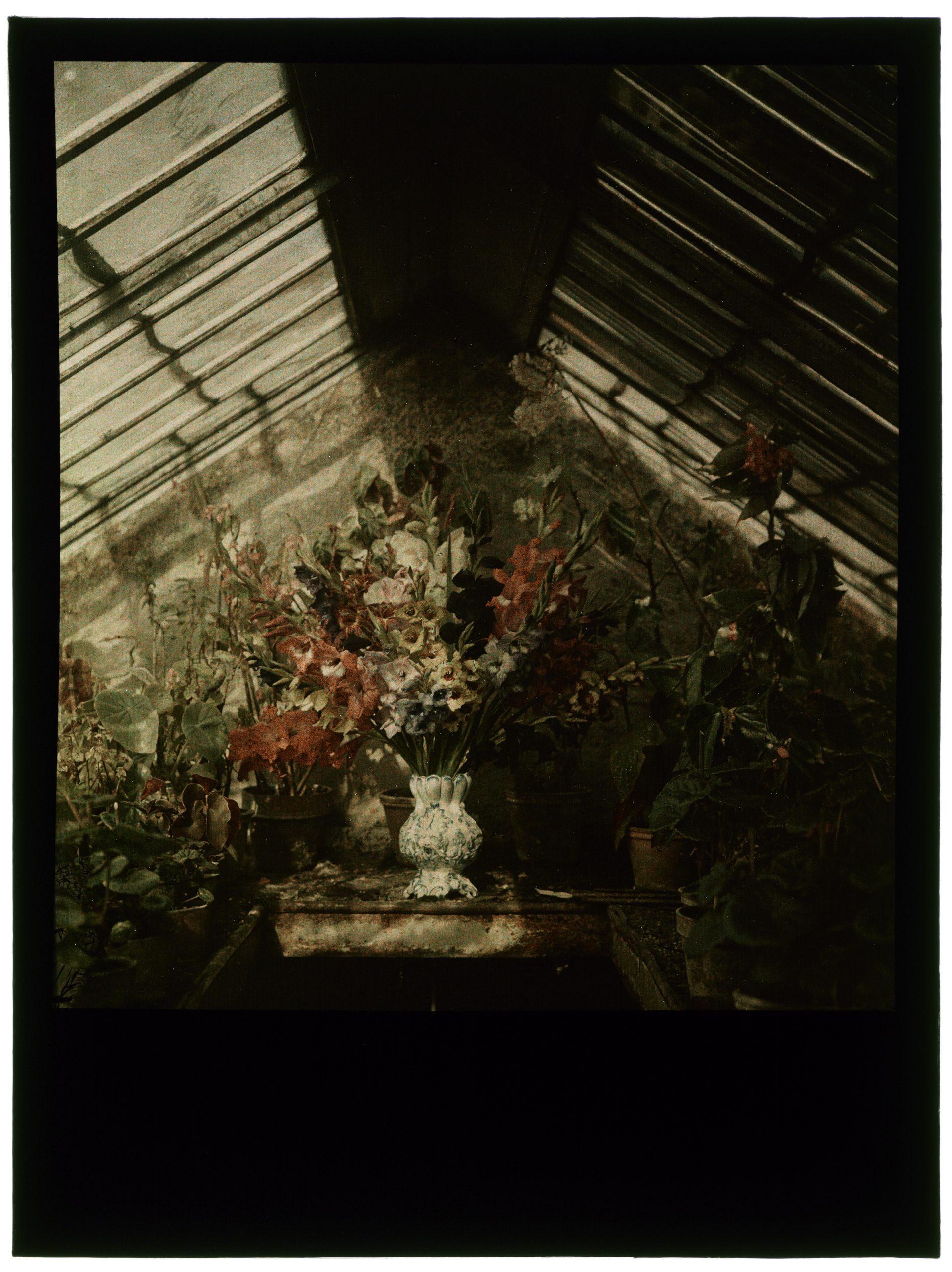 Bouquet dans la serre pointue
