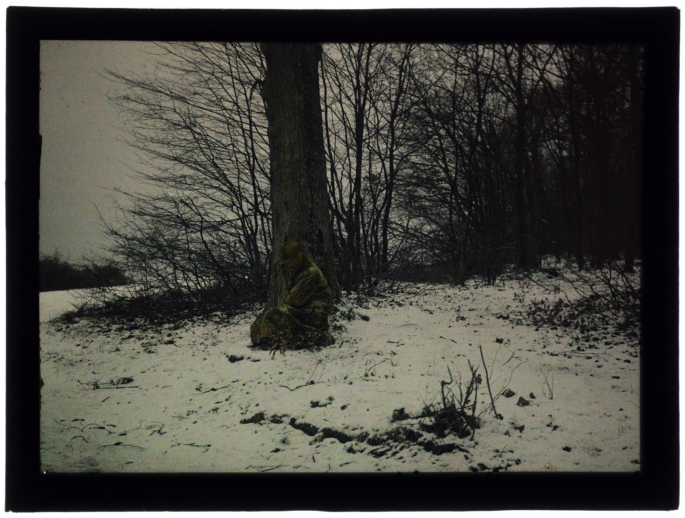 Femme dans la forêt enneigée