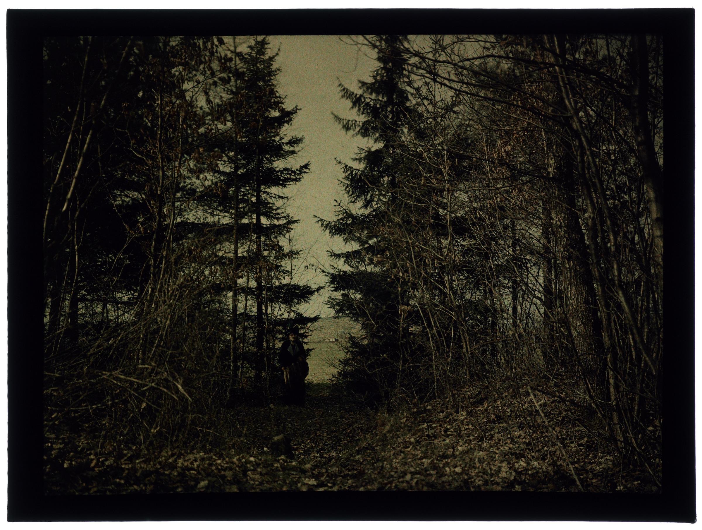 Femme ans la forêt