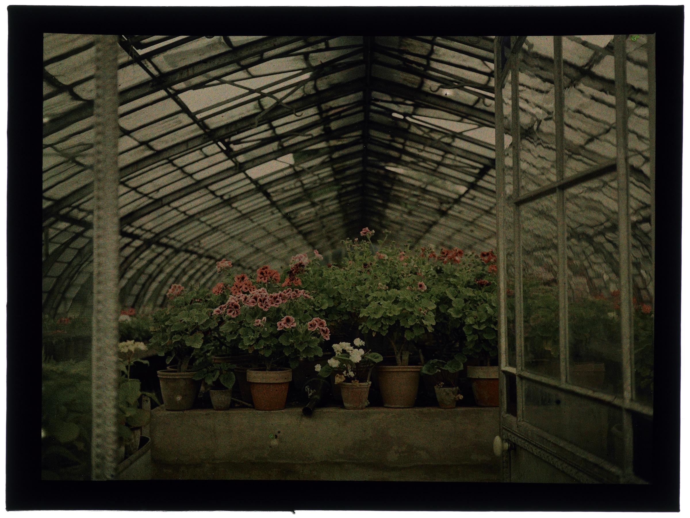 Pots de fleurs dans l'entrée de la serre arrondie