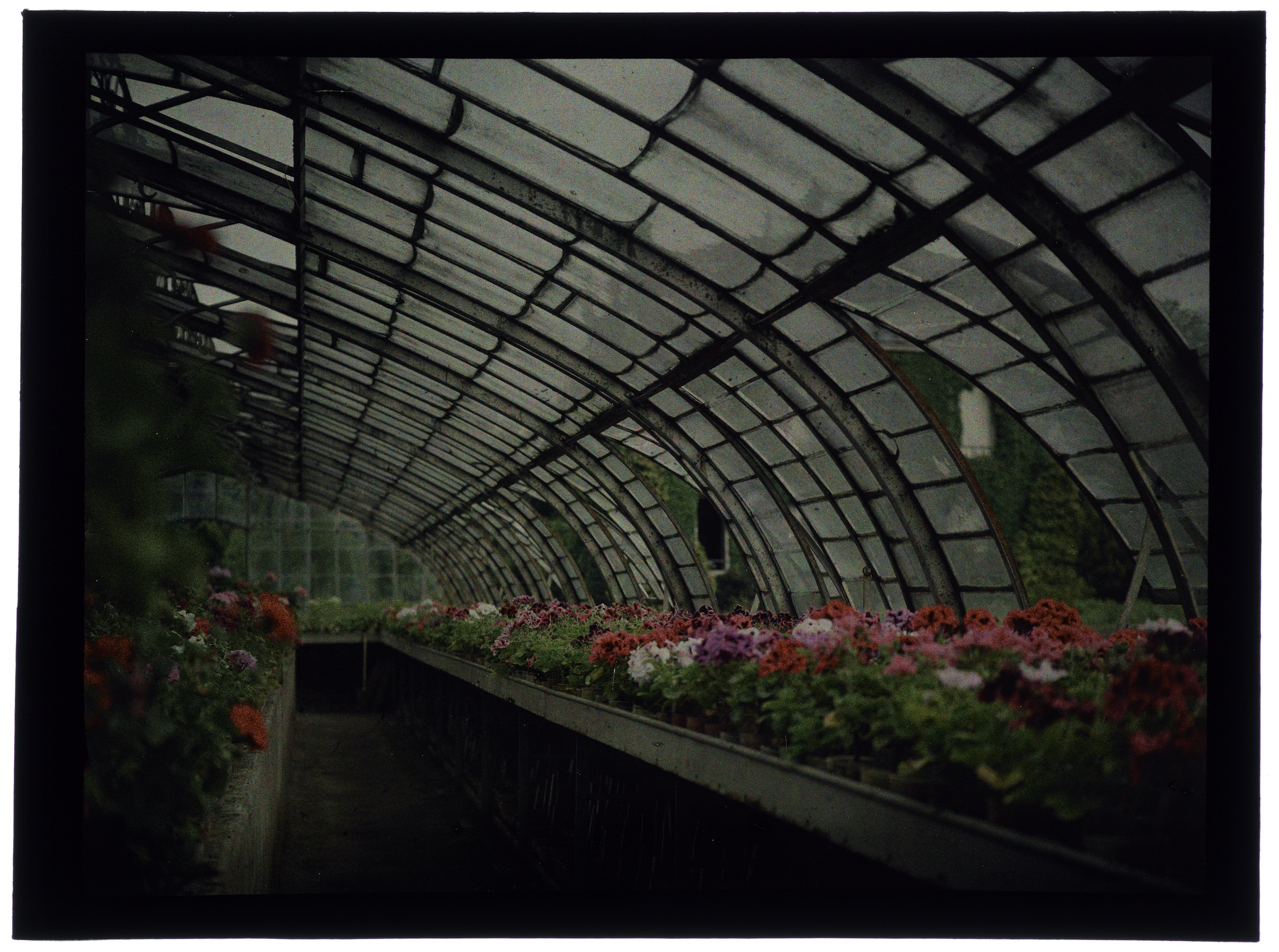 Fleurs dans la serre arrondie et iris au jardin