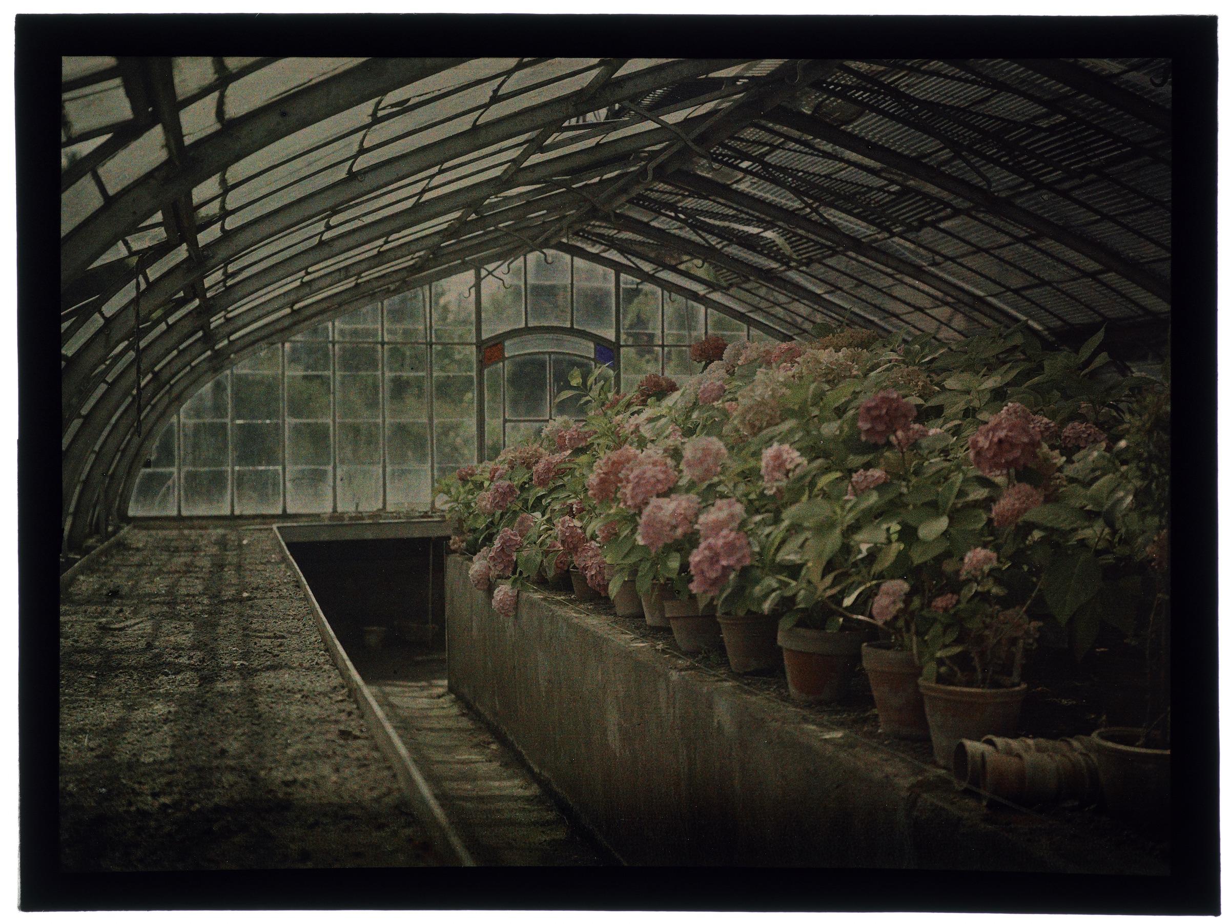 Fleurs dans la serre arrondie et hortensias au jardin