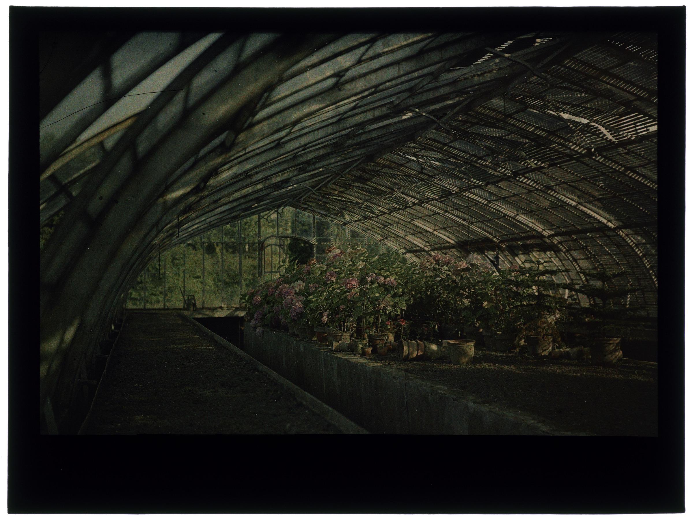 Fleurs dans la serre arrondie, au jardin et sous un toit de branchage