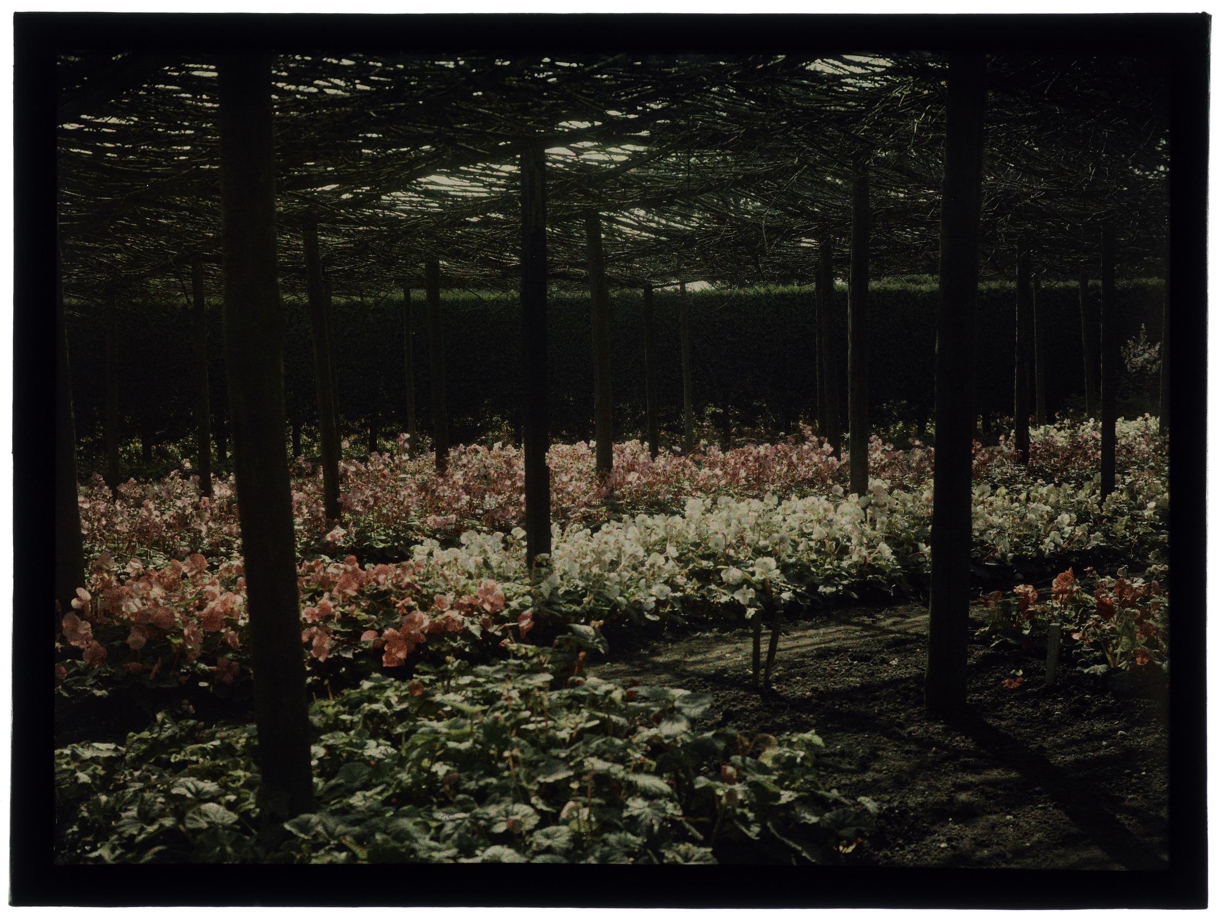 Plantation de fleurs sous un toit de branchage et fleurs dans le jardin