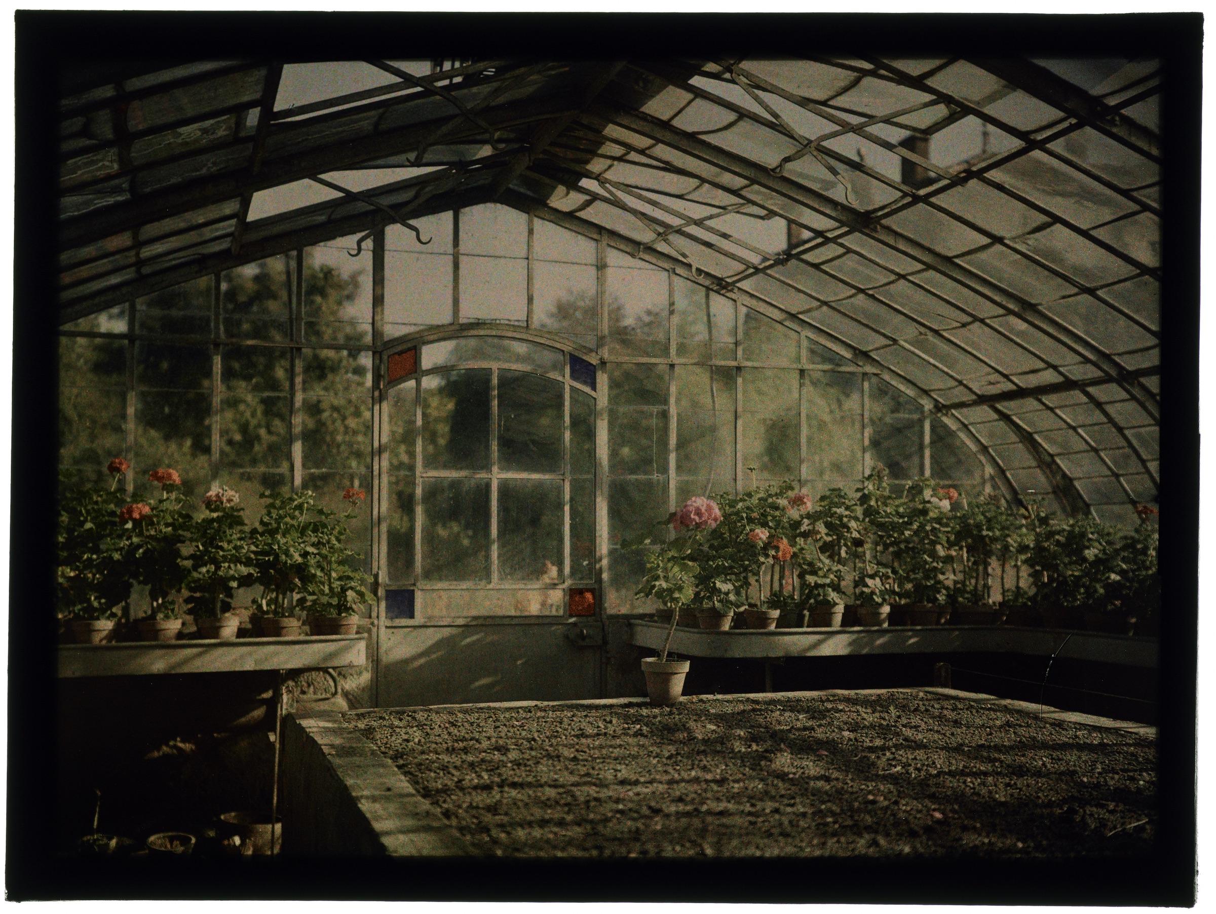 Plantation de fleurs sous un toit de branchage et fleurs dans la serre arrondie