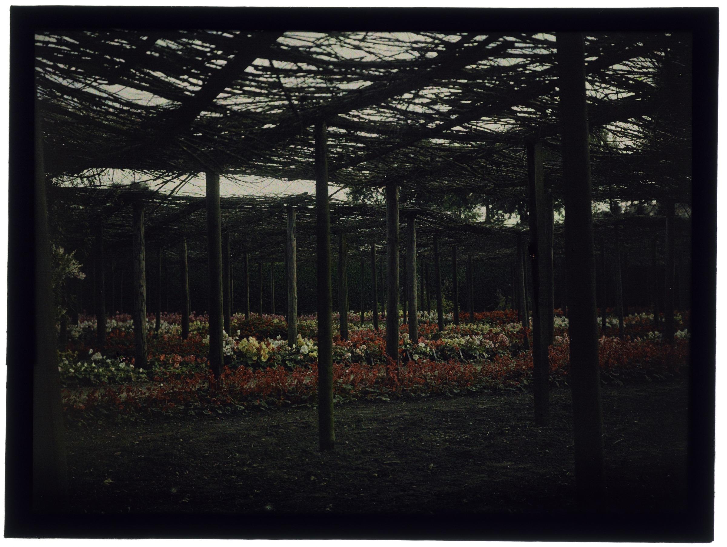 Fleurs dans la serre arrondie, sous les branchages ou dans le jardin