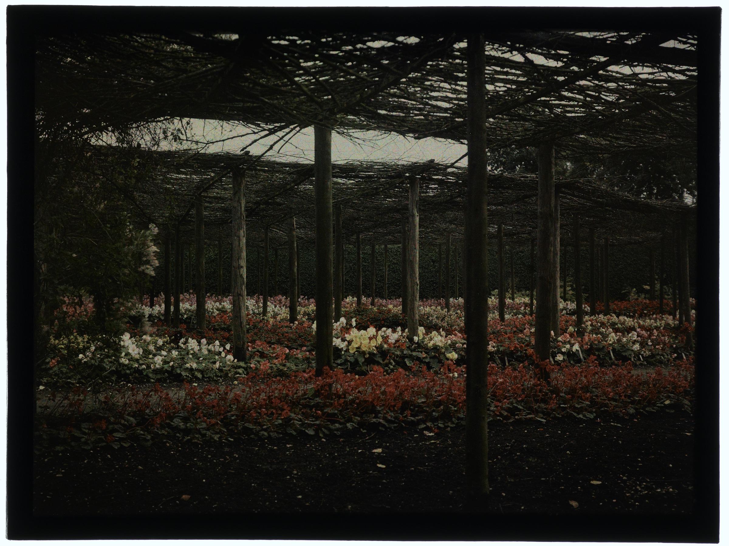Fleurs sous les branchages ou dans le jardin