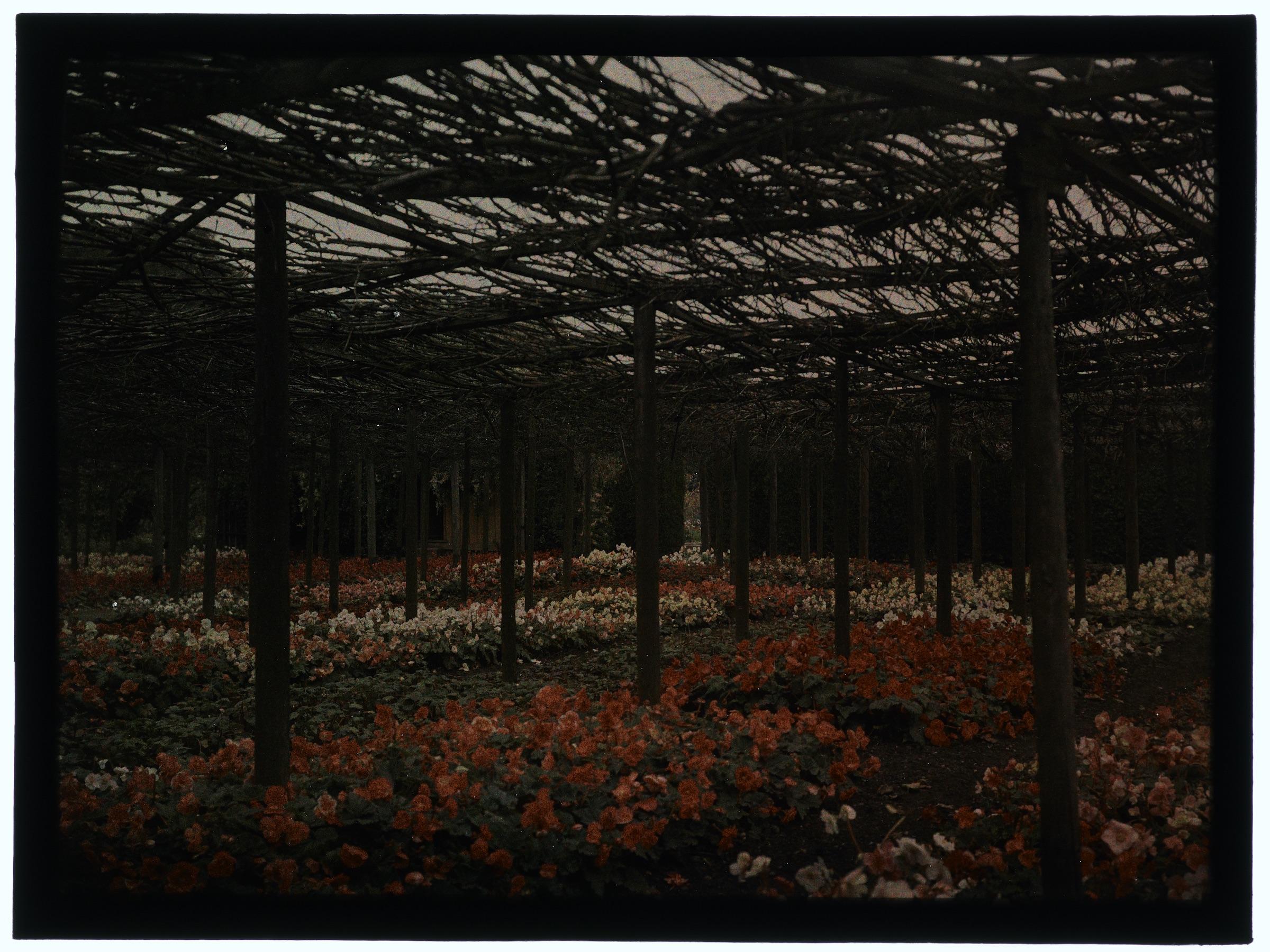 Fleurs sous les branchages ou dans la serre arrondie