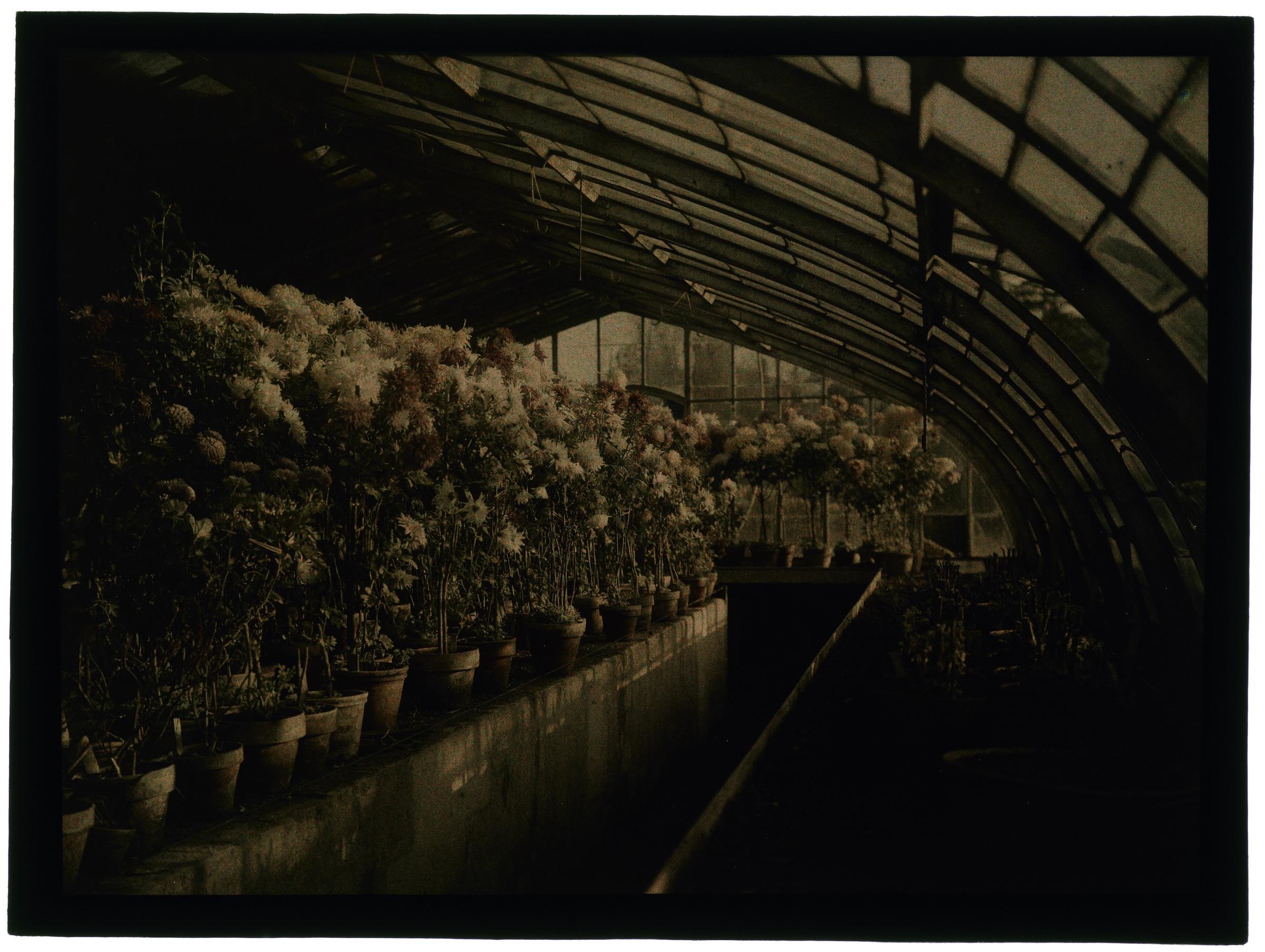 Fleurs dans les serres