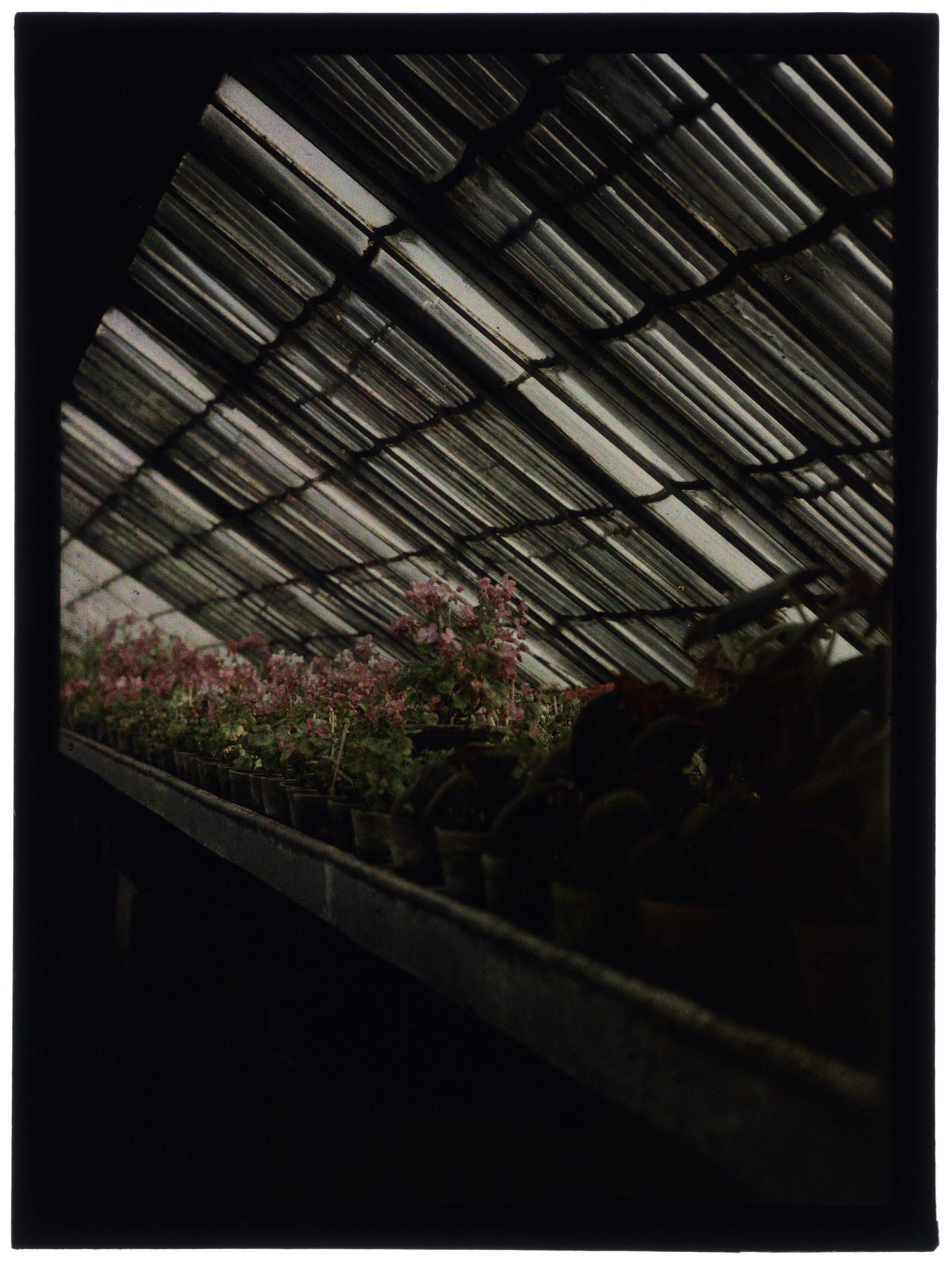 Fleurs et plantes dans les serres