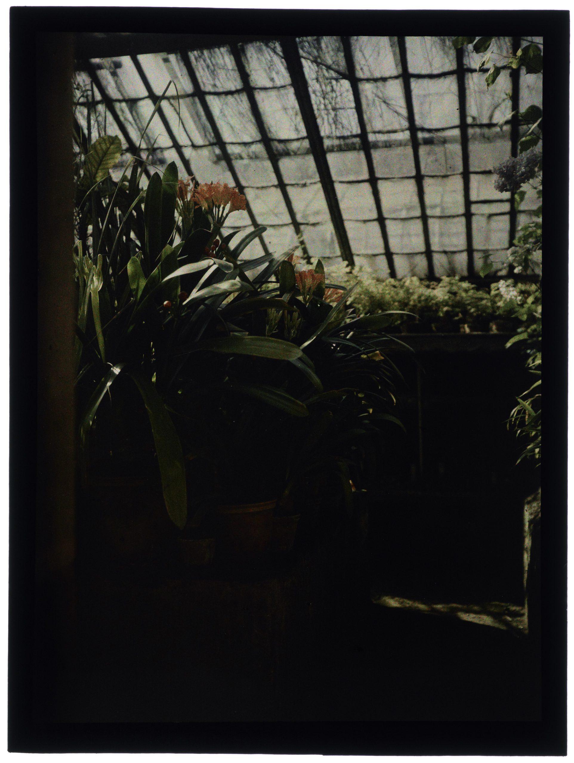 Fleurs et plantes dans la serre pointue
