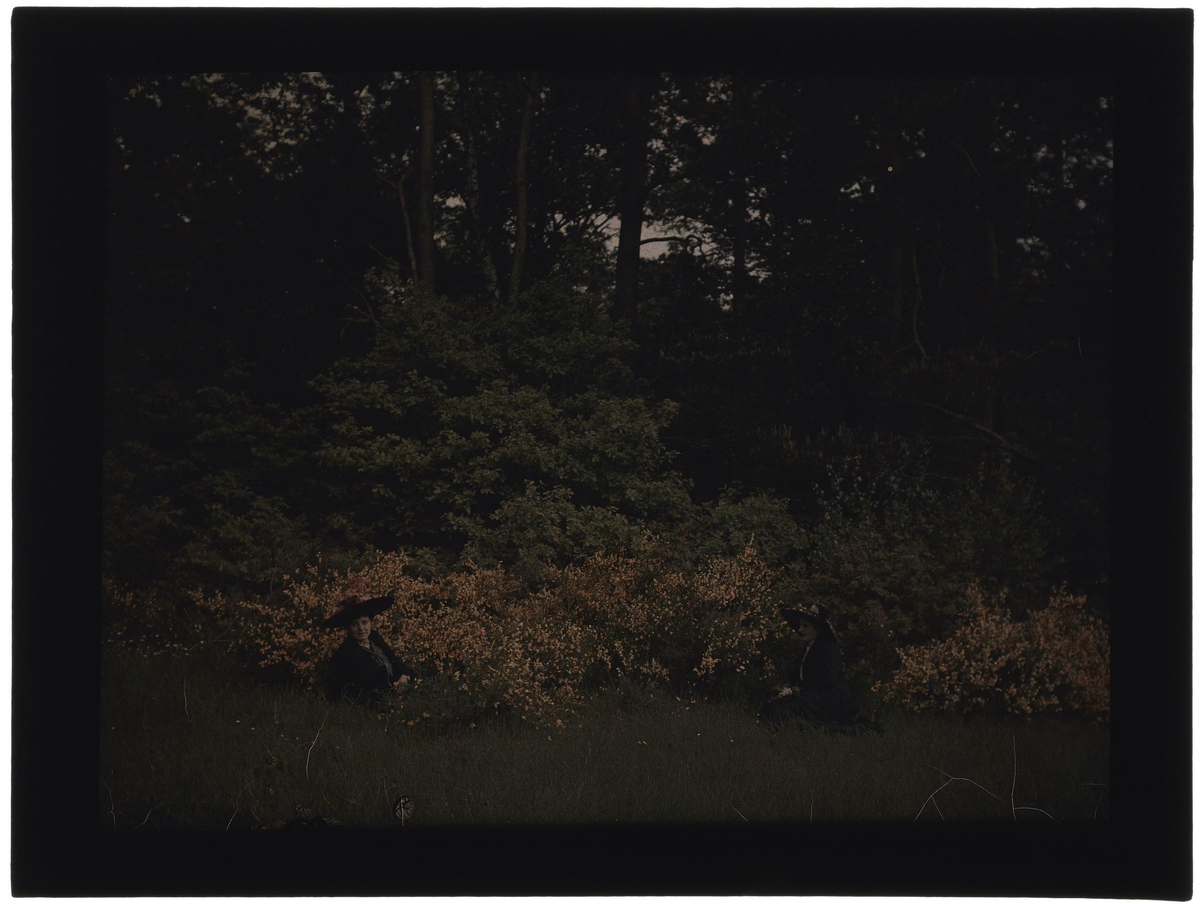 Femmes dans la forêt