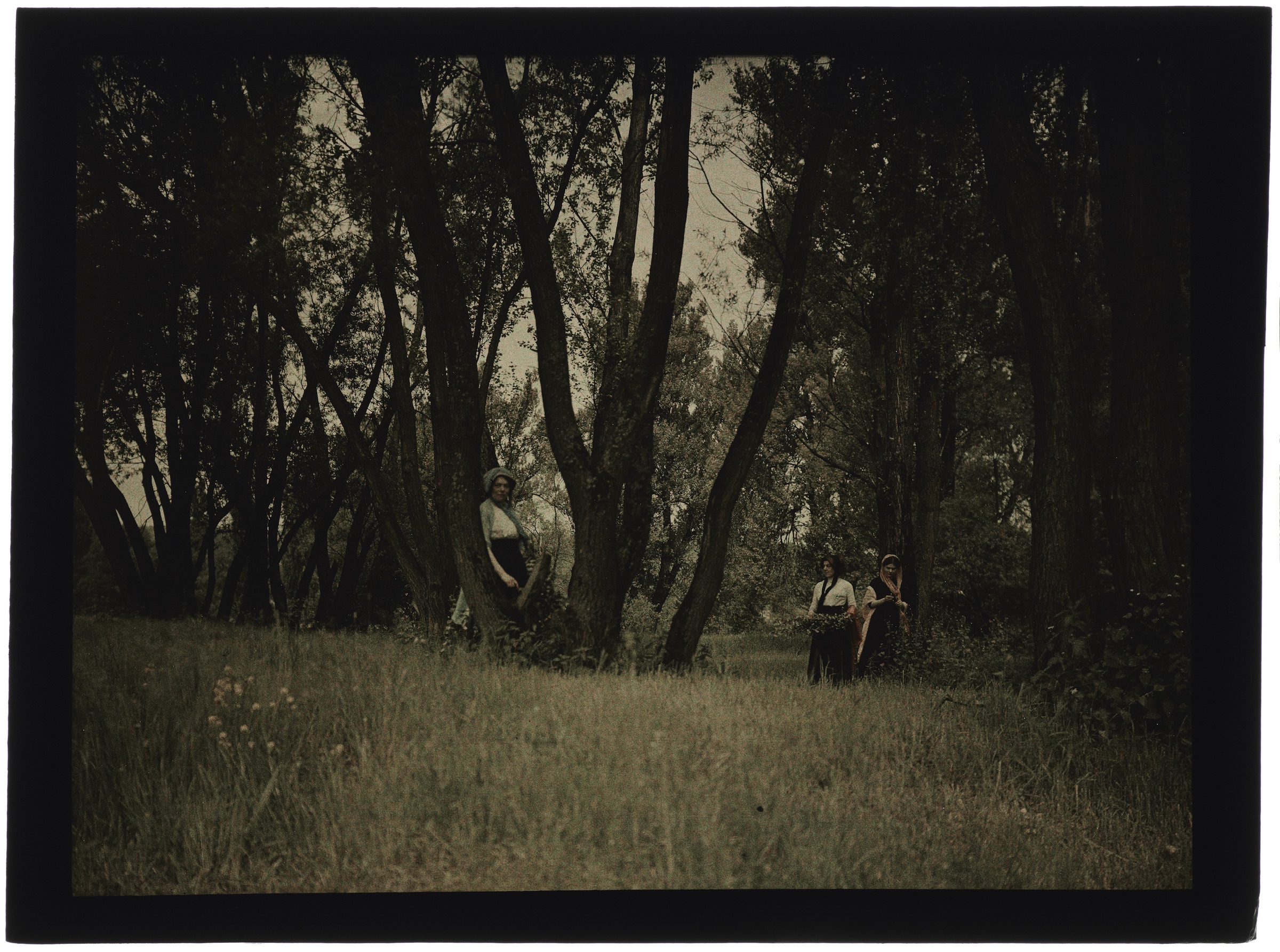 Une, deux ou trois femmes dans la forêt