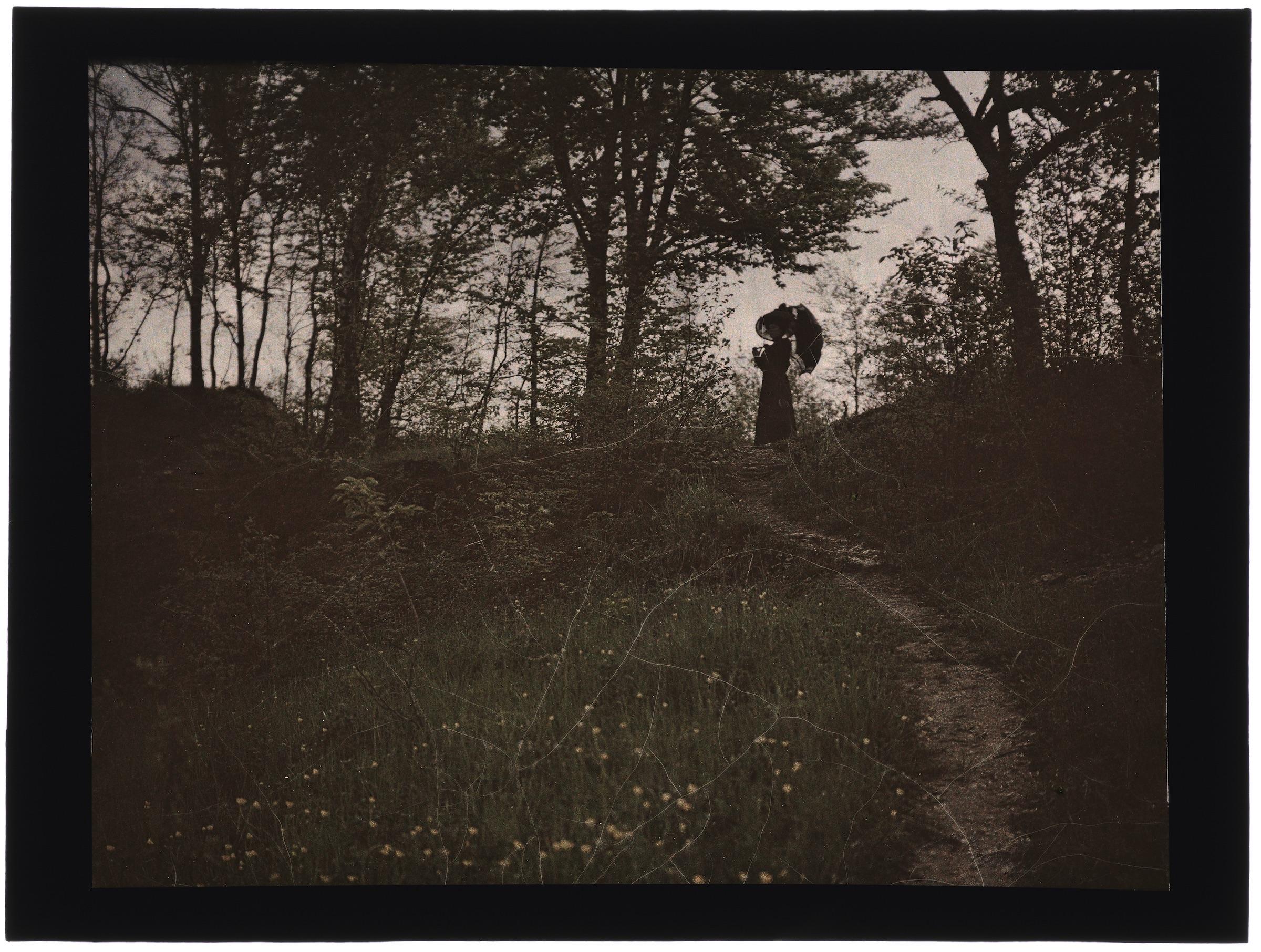 Femme(s) dans la forêt (avec de hautes buttes de terre) ou la campagne