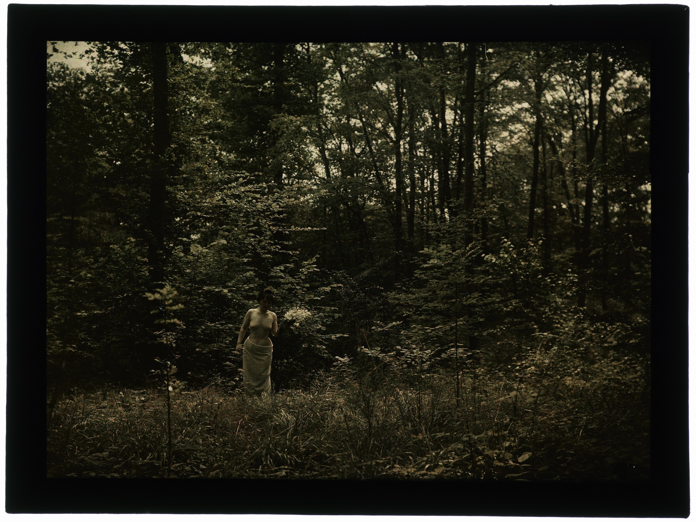 Nue dans la forêt
