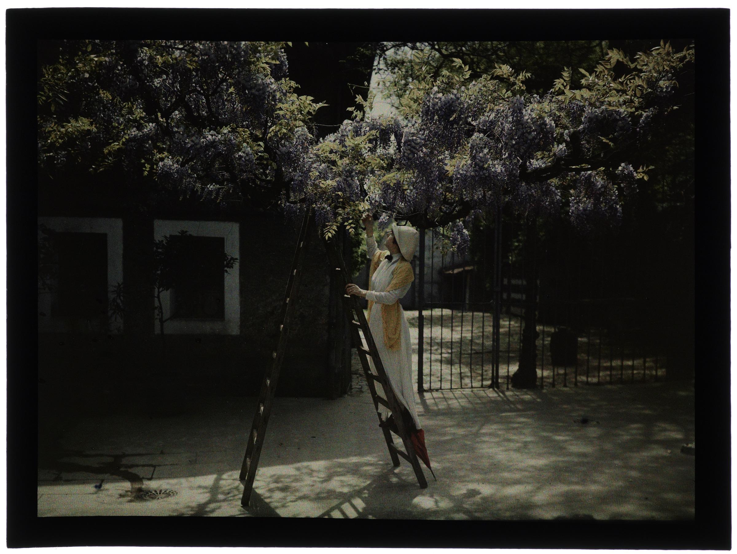 Femme sur l'échelle dans la cour à la glycine
