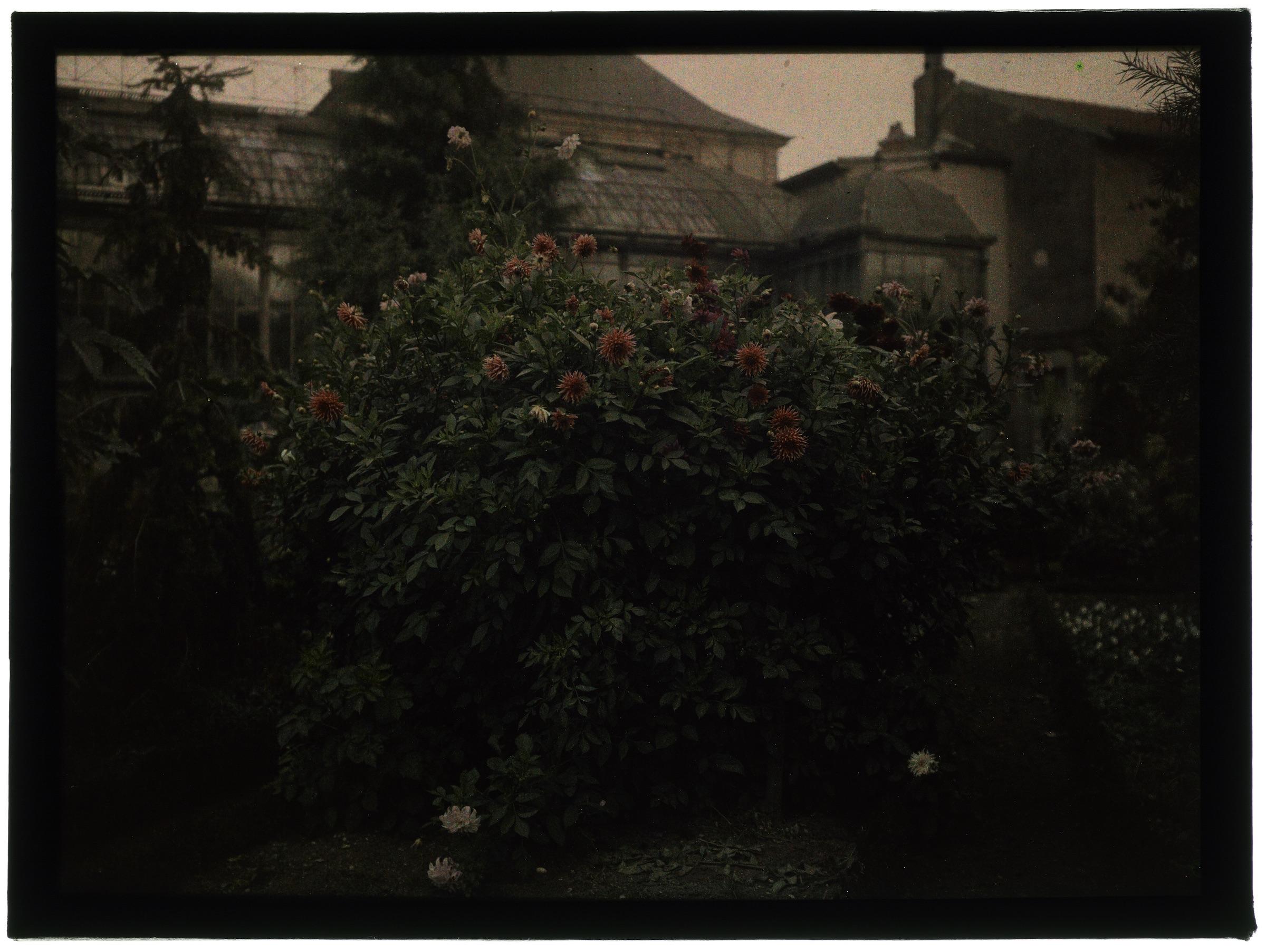 Au jardin en fleurs