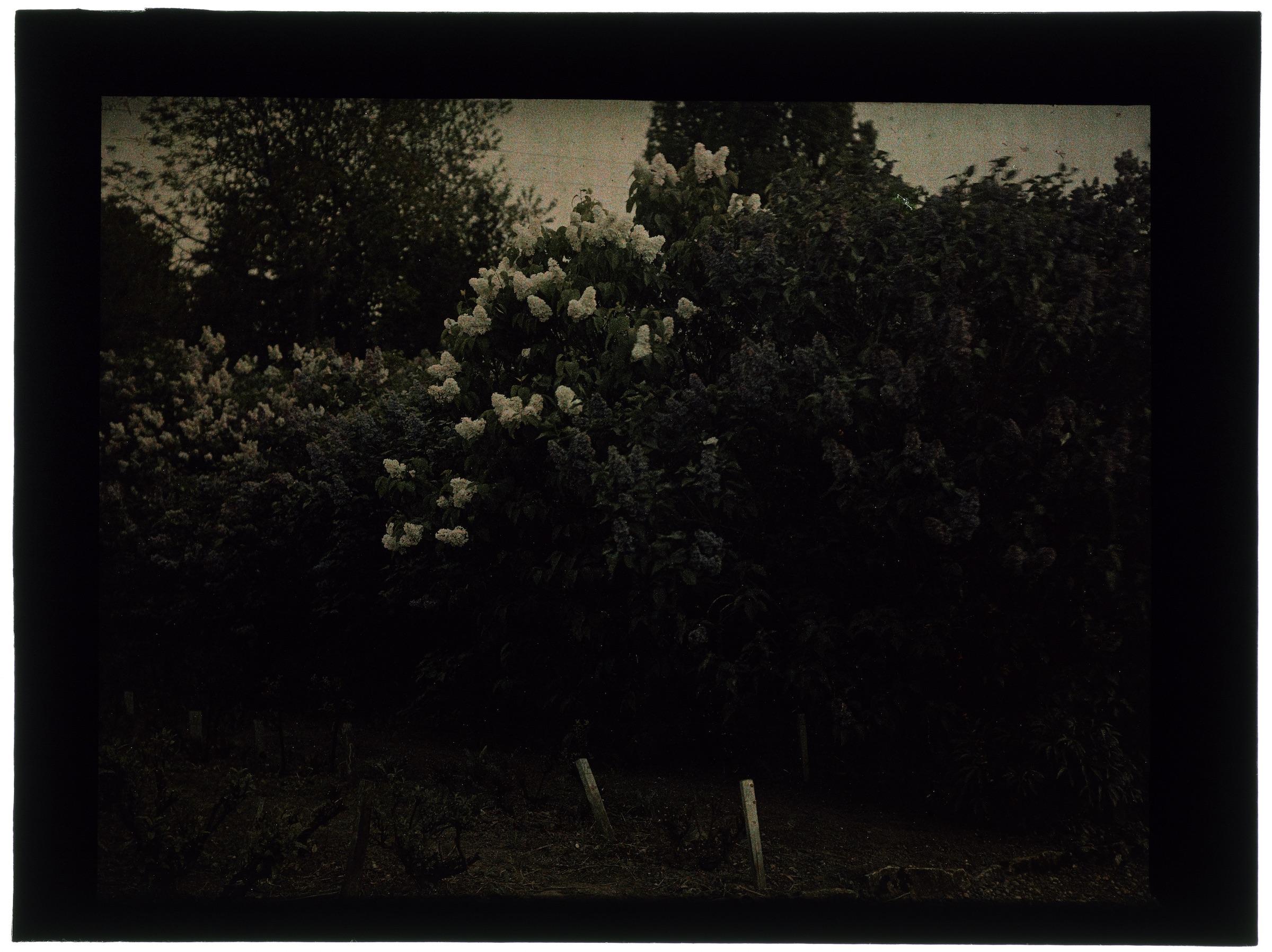 Arbustes dans le jardin