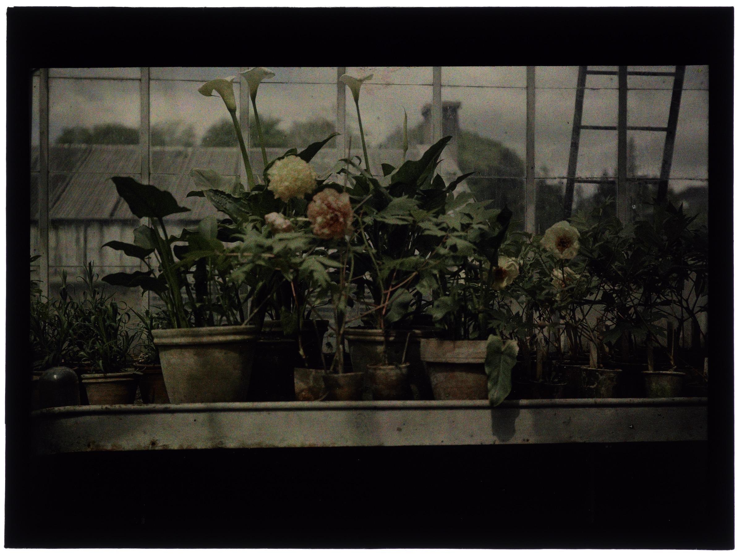 Fleurs dans la serre arrondie (serre à toit pointu à travers le vitrage)
