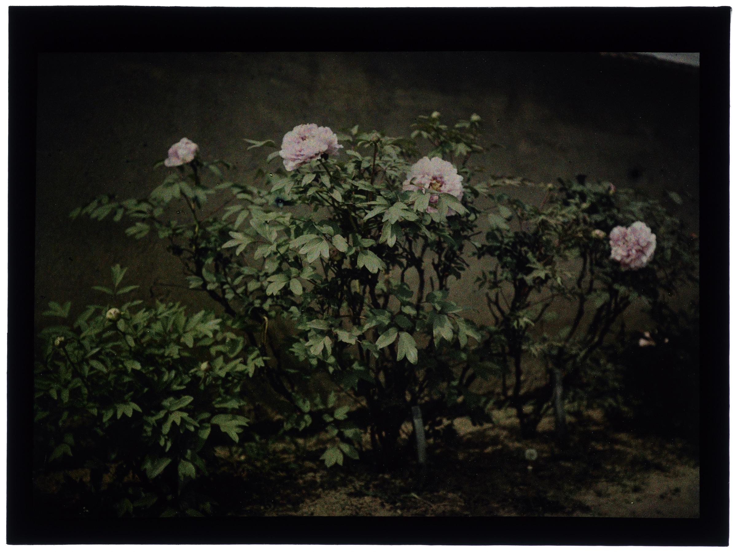 Fleurs ou arbustes dans le jardin