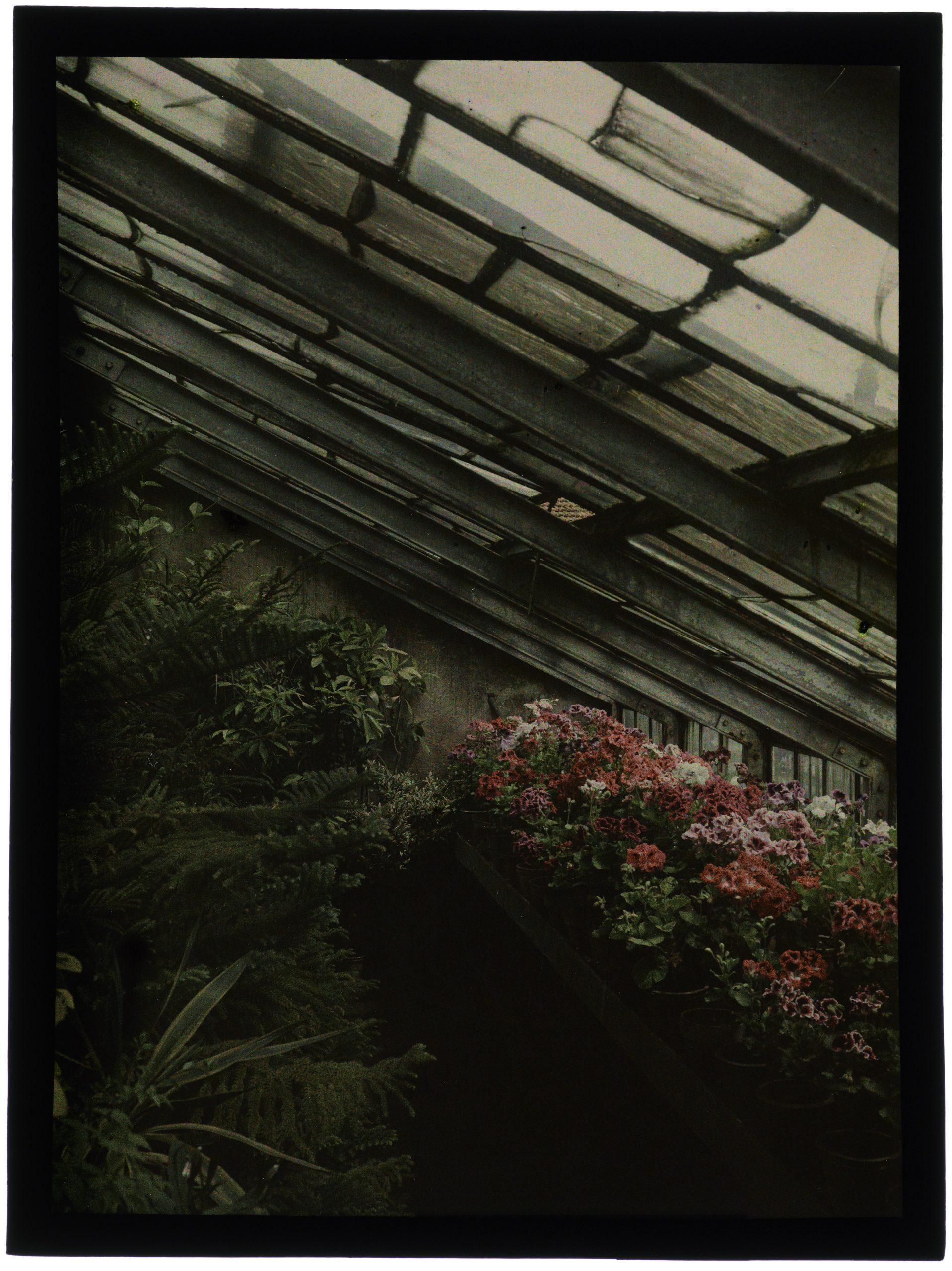 Fleurs dans la serre au toit pointu
