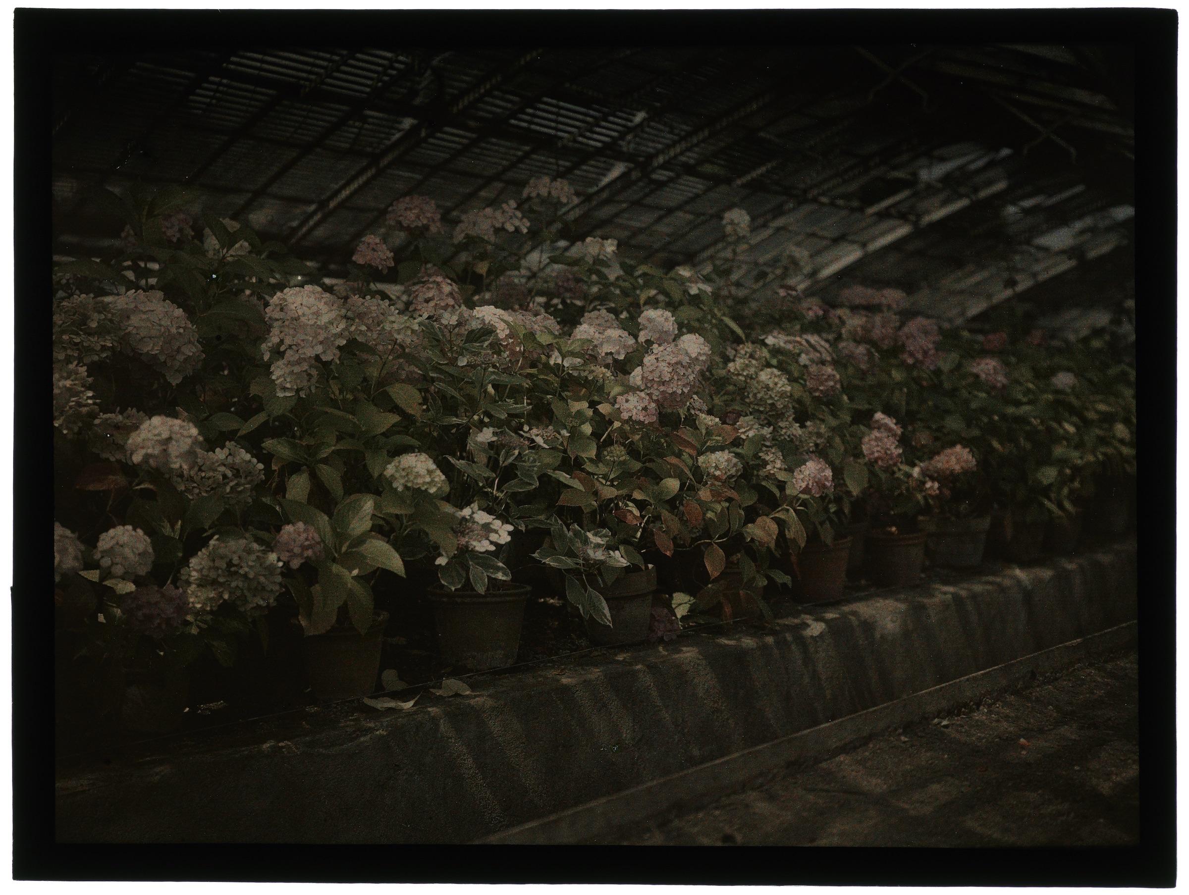 Fleurs dans la serre arrondie